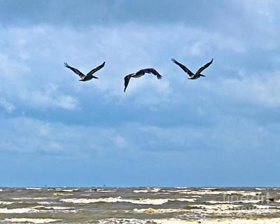 Photograph - Three In Flight by Ken Frischkorn