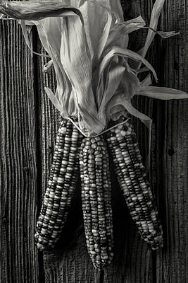 Indian Corn Wall Art - Photograph - Three Indian Corn In Black And White by Garry Gay