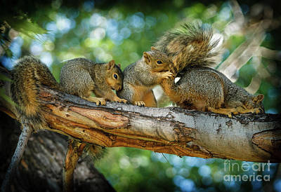 Fox Squirrel Photograph - Three Is A Crowd  by Robert Bales