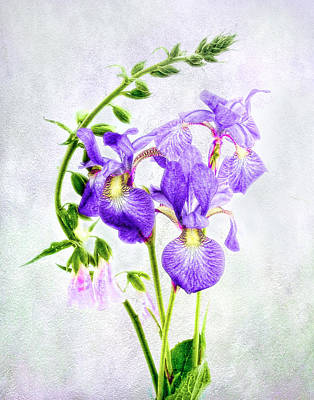 Photograph - Three Japanese Irises With Foxgloves by Louise Kumpf