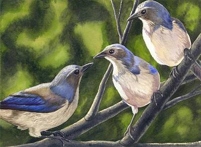 Three Jays Art Print by Catherine G McElroy