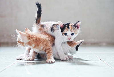 Cats Photograph - Three Kittens by Photos by Andy Le