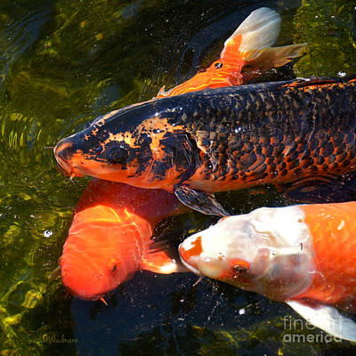 Photograph - Three Koi Waiting by Susan Wiedmann