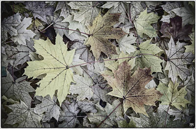 Photograph - Three Leaves by John Meader