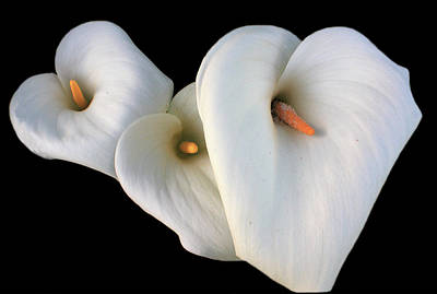 Photograph - Three Lilies by Aidan Moran