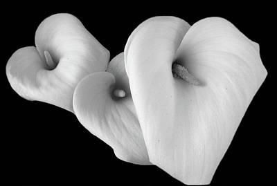 Photograph - Three Lilies On Black Background by Aidan Moran