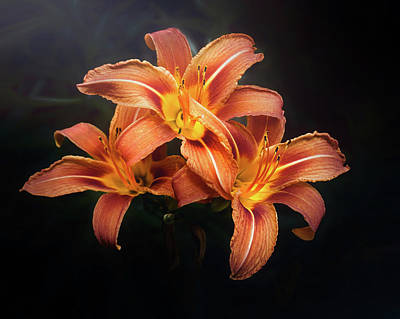 Classical Masterpiece Still Life Paintings - Three Lilies by Scott Norris