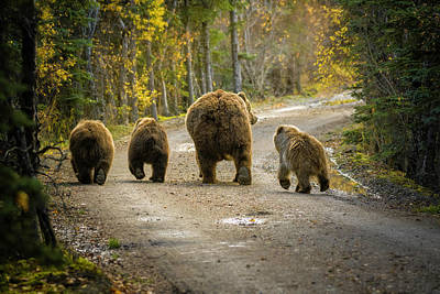 Bear Photograph - Three Little Bears And Mama by Chad Dutson