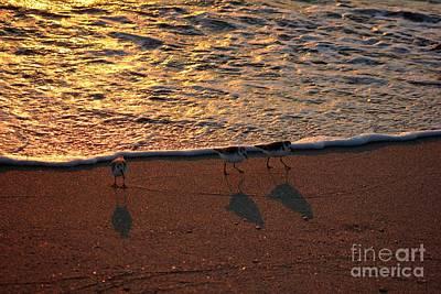 Birds Photograph - Three Little Birds By The Shore by Mesa Teresita