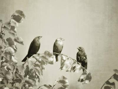 Digital Art - Three Little Birds by Will Jacoby Artwork