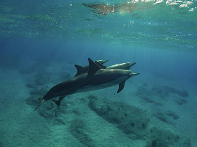 Catch Of The Day - Three Little Dophins by Megan Martens
