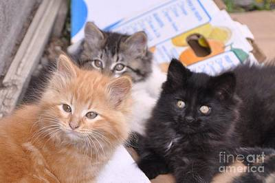 Photograph - Three Little Kittens by Reb Frost