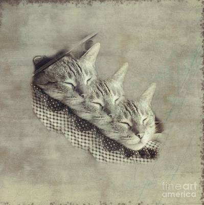 Photograph - Three Little Kittens by Renee Trenholm