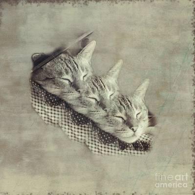 Photograph - Three Little Kittens by Renee Trenholm