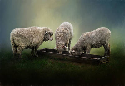 Photograph - Three Little Lambs by David and Carol Kelly