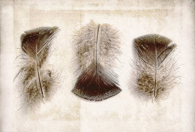 Photograph - Three Little Turkey Feathers by Louise Kumpf