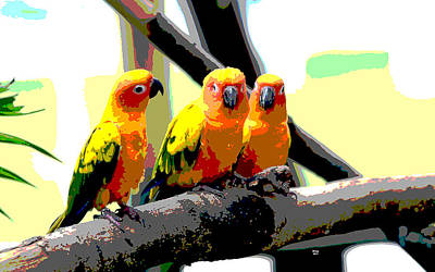 Wood Duck Mixed Media - Three Macaws by Charles Shoup