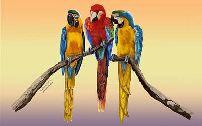Macaw Painting - Three Macaws Hanging Out by Thomas J Herring