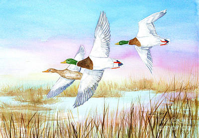 Three Mallards Art Print by Pauline Ross