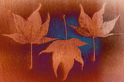Photograph - Three Maple Leaves by Don Schwartz