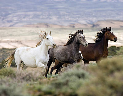 Three Mares Running Art Print by Carol Walker