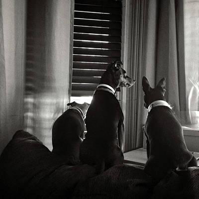 Eduardo Tavares Digital Art Royalty Free Images - Three Min Pin Dogs Royalty-Free Image by Eduardo Tavares