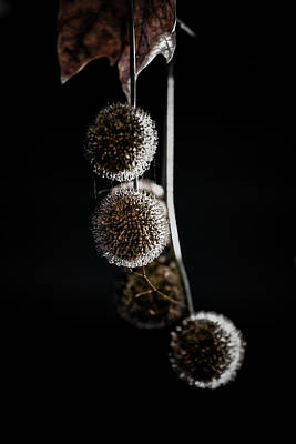 Photograph - Three Moons by Edgar Laureano