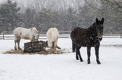 Photograph - Farm Animals At Lunchtime In The Snow by Gary Slawsky