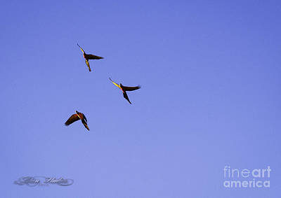 Photograph - Three Musketeers by Melissa Messick