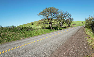 Photograph - Three Oak Trees by Tom Cochran