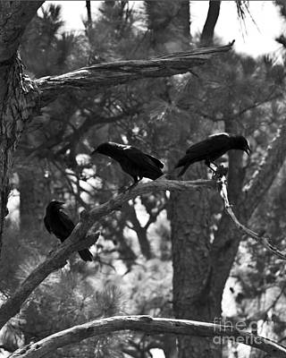 Photograph - Three On A Branch by Ken Frischkorn