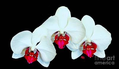 With Red. Photograph - Three Orchids by Marsha Heiken