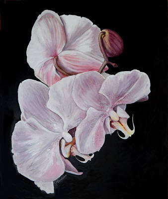 Three Orchids Art Print by Sandra Nardone