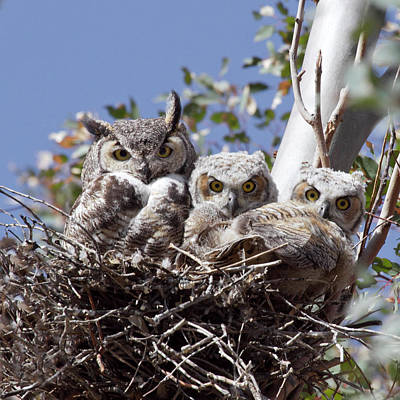 Owlets Photograph - Three Pairs Of Eyes by Elvira Butler