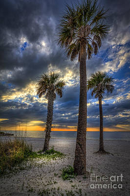 Three Palm Stew Art Print by Marvin Spates