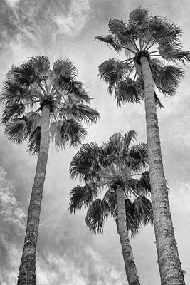 Grey Clouds Photograph - Three Palms Bw Palm Springs by William Dey