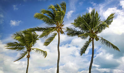 Silhoette Photograph - Three Palms by Karen Wiles