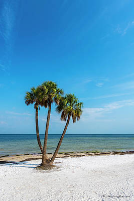Quiet Town Photograph - Three Palms by Marvin Spates