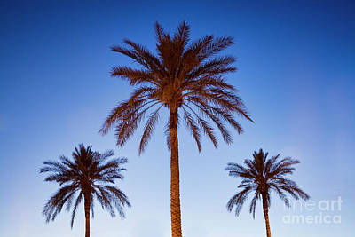 Photograph - Three Palms by Scott Kemper