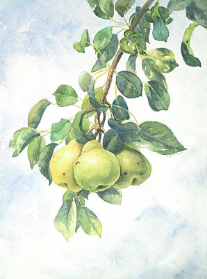 Pear Tree Painting - Three Pears by Anondi