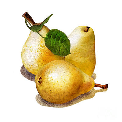 Pear Watercolor Painting - Three Pears by Irina Sztukowski