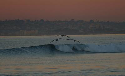 Photograph - Three Pelicans - 2 by Christy Pooschke