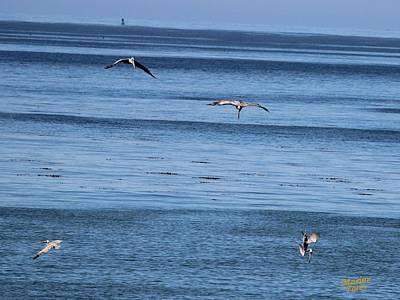 Three Pelicans Diving Art Print