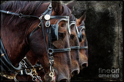Photograph - Three Percheron by David Arment