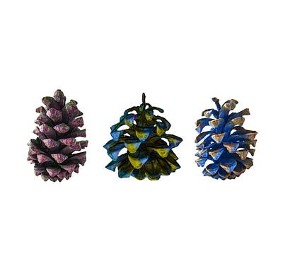 Photograph - Three Pine Cones by Stan  Magnan