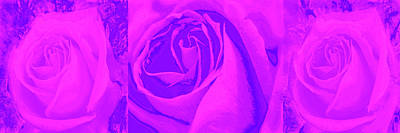 Digital Art - Three Pink And Purple Roses by Nareeta Martin