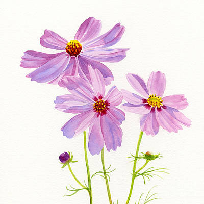 Cosmos Painting - Three Pink Cosmos Blossoms Square Design by Sharon Freeman