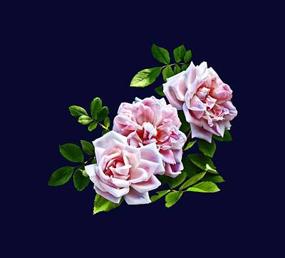 Photograph - Three Pink Roses With Leaves by Susan Savad