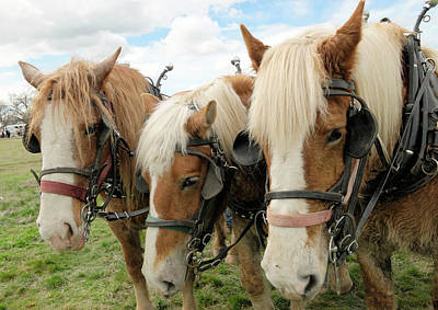 Bath Time Rights Managed Images - Three ploughing horses Royalty-Free Image by Jeff Swan