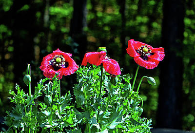 Photograph - Three Poppies 001 by George Bostian